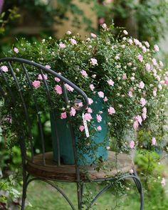 昨日アップした「ピーチプリンセス」が好評だったので、全体picをアップします✋ ・ ・ ・ #バラ#薔薇#ローズ#ローズガーデン#rose#rosegarden#花#フラワー#flower#flowerInstagram#宿根草#多年草#オープンガーデン#アキタグラム#草花#庭#庭の花#ガーデナー#メンズガーデナー#横手市#大森町#写真好きな人と繋がりたい#花のある暮らし#tokyocameraclub#ガーデニング#ピーチプリンセス