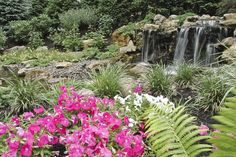 fun beautiful and safe for kids think pondless waterfall and stream, flowers, gardening, landscape, outdoor living, perennial, ponds water features, 4 waterfall spilling into the landing area at the top of the stream