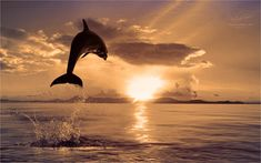 A stunning image of a dolphin jumping from the water and towards the sun, while making a splash. Image by Vitaliy Sokol.