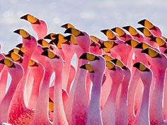 Flamingo Facts For Kids Interesting Facts About Flamingos - Fun Facts For Kids Facts For Kids, Fun Facts, Random Facts, Random Things, Beautiful Birds, Animals Beautiful, Pretty Birds, Flamingo Facts, Flamingo Decor