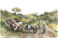 African Nguni cattle being herded by two young umfanas. Watercolour on Bockingford 300 paper. African Theme, South African Artists, Watercolours, Cattle, Watercolor Paintings, Wildlife, Birds, Paper, Animals