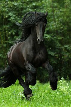 Horses:  Majestic. ... Re-pinned by StoneArtUSA.com ~ affordable custom pet memorials since 2001