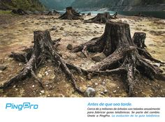 Preservemos nuestro planeta. ¡Únete a la evolución!  Baja el App ¡Gratis! y conoce más de #PingPro