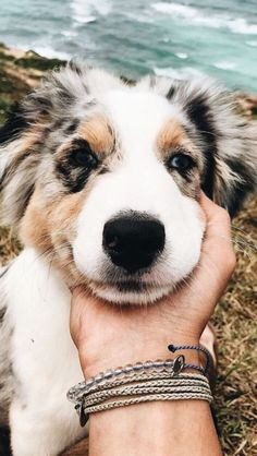 Latest No Cost dogs and puppies diy Thoughts Complete you cherish your canine? Of course, you do. Appropriate canine attention plus coaching will make sur Cute Baby Animals, Animals And Pets, Funny Animals, Cute Dogs And Puppies, I Love Dogs, Doggies, Cute Creatures, Animals Beautiful, Dog Breeds