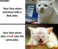 Funny crush memes, crazy funny memes, best funny jokes, great memes, you fu Funny Crush Memes, Crush Humor, Super Funny Memes, Funny Jokes To Tell, Crazy Funny Memes, Funny Animal Memes, Funny Cats, Funny Animals, Memes Humor