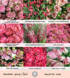 Mayesh Cooler Picks - Spring - Cerise // Products - top: Quartz Gem Garden Spray Rose, Watermelon Parrot tulips, Augusta Luise Garden Rose | middle: Romantic Antique garden rose, red flowering grevilliea, pink scabiosa | bottom: Pink columbine, coral dianthus, pink frilly tulips