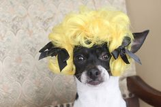 Pet   wig  for dog or cat by lenapavia on Etsy, $14.50