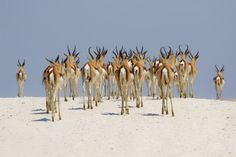Etosha National Park is one of the top safari destinations in Namibia. If you're planning a trip, make sure to read this guide first. Kruger National Park, National Parks, Game Reserve, Wild Nature, Nature Animals, Natural Wonders, Nice View, Mammals, Horns