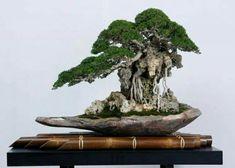 Bonsai Styles, Miniature Trees, Bonsai Garden, Growing Tree, Ikebana, Japanese Art, The Rock, Art Forms, Herbs