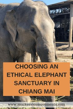 Choosing An Ethical Elephant Sanctuary In Chiang Mai Travel tips 2019 Are you looking to play with Elephants in Thailand? Choosing An Ethical Elephant Sanctuary In Chiang Mai Thailand Thailand Tourism, Thailand Travel, Asia Travel, Travel Plane, Thailand Vacation, Thailand Adventure, Chiang Mai Thailand, Elephant Sanctuary Chiang Mai, Chiang Mai Elephant