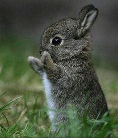 It's a good thing Bunnies are so cute, because in the garden they are such pests.