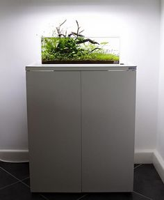 ADA 45F aquascape by George Farmer Huntingdon ( UK Angleterre) ·Pin by Aqua Poolkoh