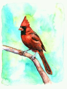 """$75.00 Cardinal Original Watercolor painting•9"""" x 12"""" Watercolor on Paper•ORIGINAL painting - not a print•unframed (I would matte this to your liking - maybe to an 8 x 10)•Ships via USPS Priority Mail•Hand Drawn, Hand Painted  Contact me for more details - info@christystudios.com"""
