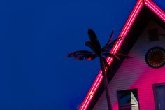 silhouette photo of coconut tree near house under blue sky Neon - Infinity Collections