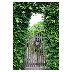 wooden garden gate surrounded by carpinus betulus (hornbeam)