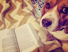 How awesome that this All Souls Reader can enjoy the adventure with such a sweet looking companion! e.c.tanengam on IG says: #deserveyourchilltime #dogfie #dogs_of_instagram #dog #dogstagram #cuteface #cutie #ilovemydog #beagle #beaglesofinstagram #elliot #bestdogever #bookstagram #booksofinstagram #instabook #instagram #instalife #bestfriend #lelivreperdudessortileges #deborahharkness #ilovemydog #readwithme #reader #bookblogger #lovelife #love #bestmomentoftheday