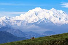Postcard Perfect: Wildlife spotting in Denali National Park