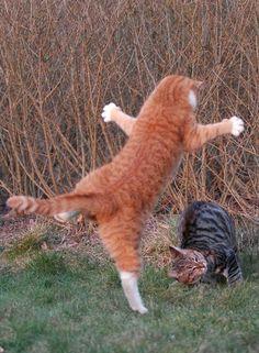 funny_cat20