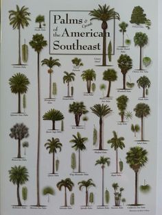 Palms & Cycads of the American Southeast