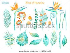 Vector floral set.Colorful floral collection with tropical leaves and flowers strelitzia,drawing watercolor. Tropical set leaves. Set of floral elements for your compositions. - stock vector