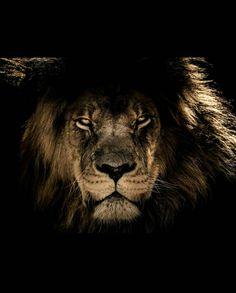 The black lion Canvas Print by alexandra_arts Logo Lion, Lion Poster, Black Lion, Lion Mane, Lion Pictures, Closed Eyes, Foto Art, Mundo Animal, Lion Tattoo