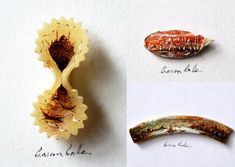 Hasan Kale is the Turkish artist has a special masterpiece of painting on the tiny objects. He uses small tools as his canvas miniature painting like wings of Pasta Kunst, Pasta Art, Colossal Art, Unusual Art, So Creative, Tiny Treasures, Miniture Things, Kale, Collage Art