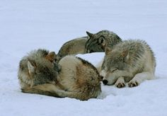 Just a pack nap