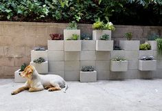 concrete cinderblock garden wall from Apartment Therapy