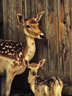 afc6cf2e0414 75 Best Deer Girl images