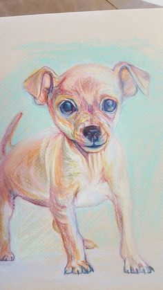Tiny Package, Big Live, chihuahua drawing, 9 x 12, original, colorful, playful dog  Contemporary Colorful Animal Art and Pet Portraits from Free Rein Art by Sue Steiner http://www.paintingpetsonline.com  https://www.facebook.com/FreeReinArtStudio/