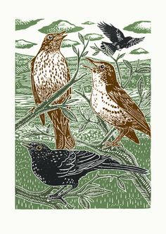 Blackbirds and Thrushes ~ Poster designed by James Green, English Artist ....