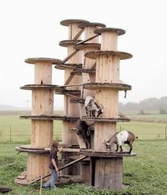 Dazzling earned goat farming ideas browse around here Mini Goats, Baby Goats, Goat Playground, Goat Shed, Goat Shelter, Easy Chicken Coop, Goat Barn, Dwarf Goats, Raising Goats