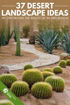 37 Desert Landscape Ideas Desert landscaping is beautiful. When you live in an area where cactus thr Dessert Landscaping, Desert Landscaping Backyard, Succulent Landscaping, Landscaping With Rocks, Front Yard Landscaping, Landscaping Ideas, Front Yard Landscape Design, Desert Gardening, Succulent Gardening