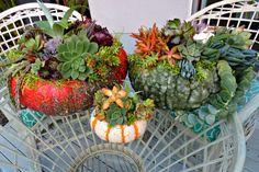 DIY Succulent Pumpkin Centerpiece