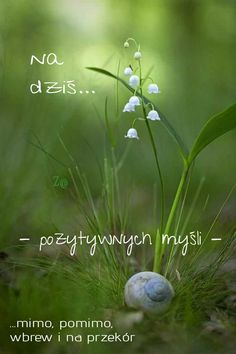 Motto, Humor, Quotes, Frases, Fotografia, Polish Sayings, Good Morning Funny, Astrology Signs, Quotations
