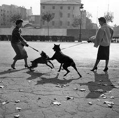 Paseando perros por la Diagonal, Barcelona 1950. Francesc Catalá-Roca