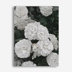 Featuring a blooming white English Rose bush, this canvas print was originally hand painted by our in-house artist team, and now available as a reproduction stretched and ready-to-hang canvas art piece. Size & frame colour options available. We ship worldwide. #ThePrintEmporium #botanical #floral #art #canvas #rose #wallart #floralart #white #englishroses www.theprintemporium.com.au