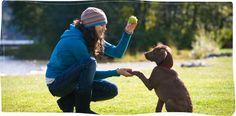 raining catz & dogz- Dog walking, boarding, natural treats and more.