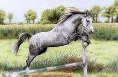 Grey Horse by *ManiaAdun on deviantART