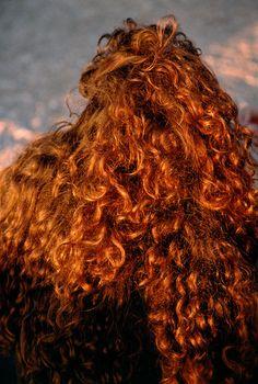 Gianicolo quarter by Harry Gruyaert on artnet Magnum Photos, William Eggleston, Infrared Photography, Italian Actress, Denim Branding, Hair Art, Redheads, Style Icons, Curly Hair Styles