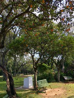 Jardín botánico. Asunción-Paraguay