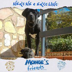 Nerone e Ercolino #Mongesfriends