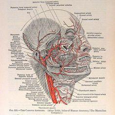 1933 Vintage Anatomy Book Plate   par ninainflorida