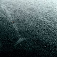 I'm pretty sure that's a blue whale. I hope this is real and not Photoshopped. I hope the people in the boat saw the whale and knew it was right under them.
