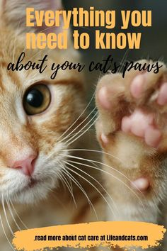 Paw and claw care for your cats. Best way to trim your cat's claws alone. Grooming and health concerns for your cat's paws and claws. Cat Care Tips, Pet Care, Information About Cats, Cat Ages, Kitten Care, Paws And Claws, Cat Behavior, Cat Grooming, Cat Health
