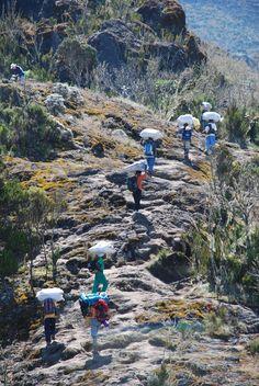 Porters on Rongai Route heading to Mawenzi Tarn