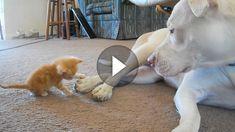 Hund und Katze in einem Haus: Kann gut gehen - muss es aber nicht. Diese beiden sind - zum Glück - ein Beispiel dafür, dass Hund und Katze durchaus...