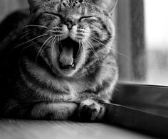 #cat #tired