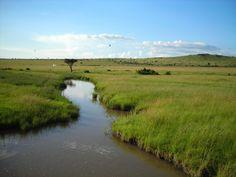 Small River inside Masai Mara, Kenya