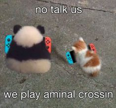 Prepare To Be Wooed By This Caturday Mood Cat Memes) - World's largest collection of cat memes and other animals Animal Crossing Qr, Animal Crossing Pocket Camp, Cat Memes, Funny Memes, Wholesome Memes, Stupid Memes, Love Memes, Reaction Pictures, My Animal